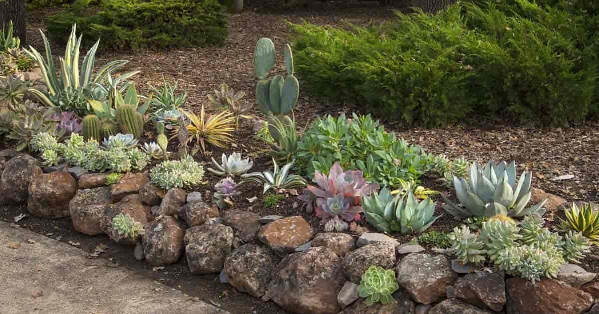 rock garden of succulents