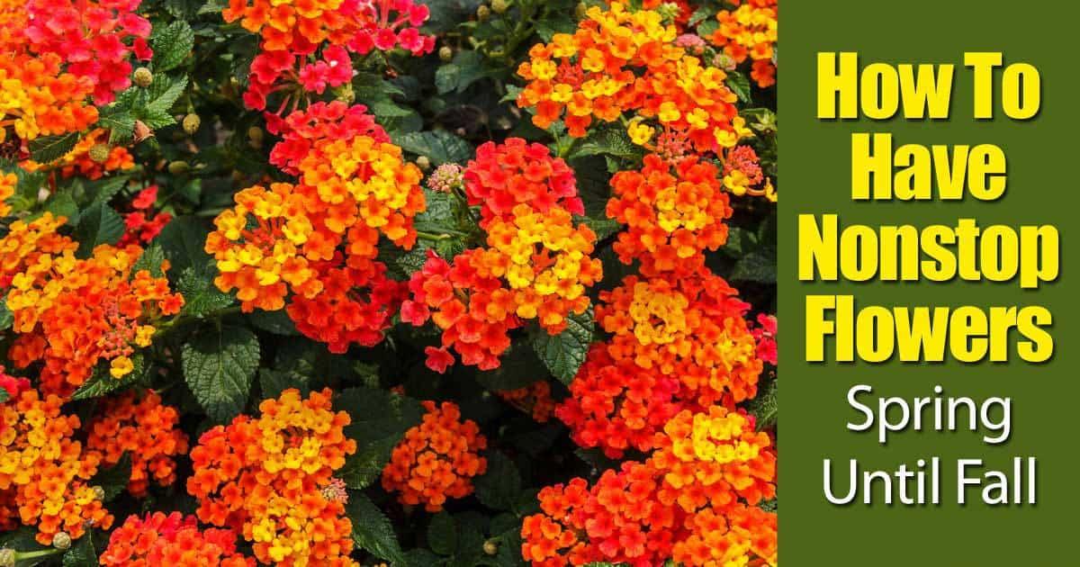 nonstop-flowers-93020152403