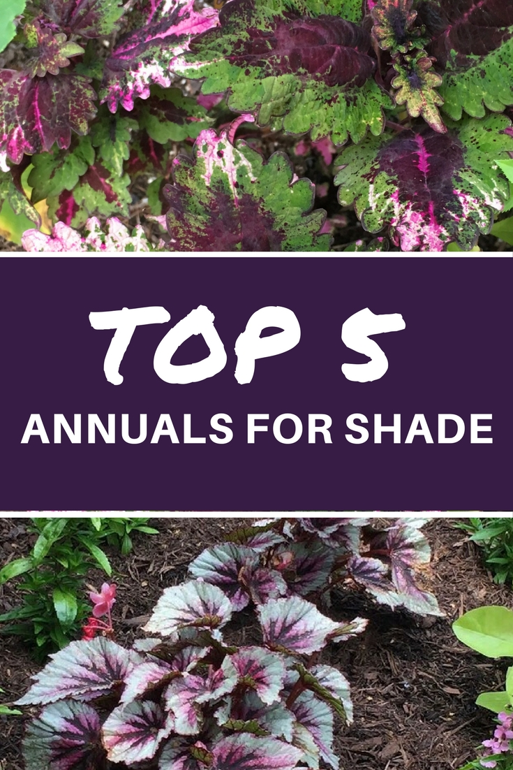 Top 5 Annuals For Shade Sunscapes